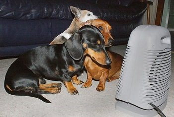 Your dog's nose will get dry sitting in front of heaters