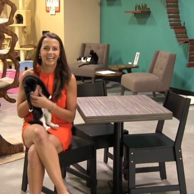An example of a cat cafe