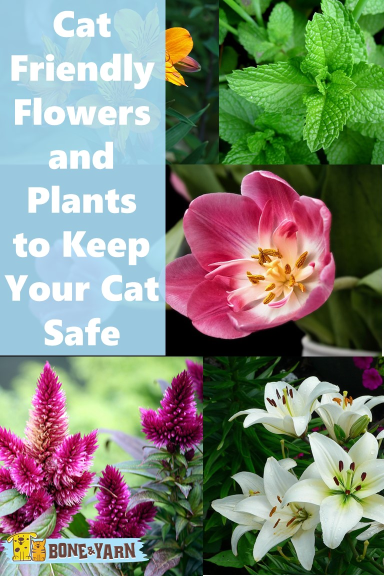Cat Friendly Flowers and Plants