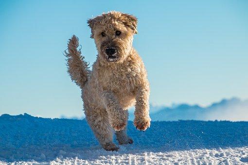 Holistic Dog Food - Energy