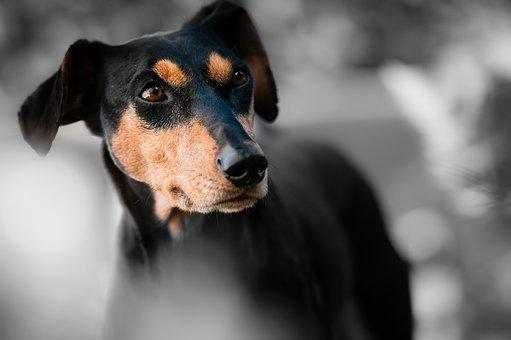 Holistic dog food sharpened eye sight