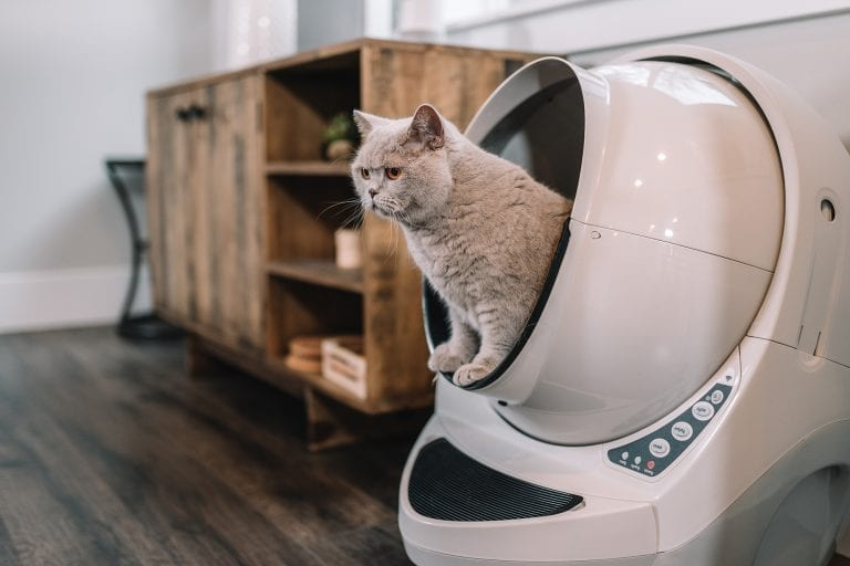 Automatic litter boxes make this stinky chore easier to manage