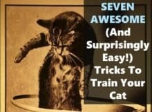 Seven ways to train your cat