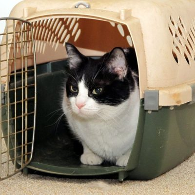 Get a proper carrier when flying with a cat
