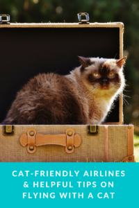 Flying with a cat requires careful preparation