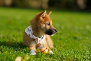 Pet-safe weed killers and pesticides keep your inside and outside safe for dogs and cats