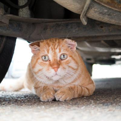 Cats often hide under cats
