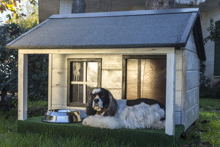 The best dog houses keep your pup safe and warm
