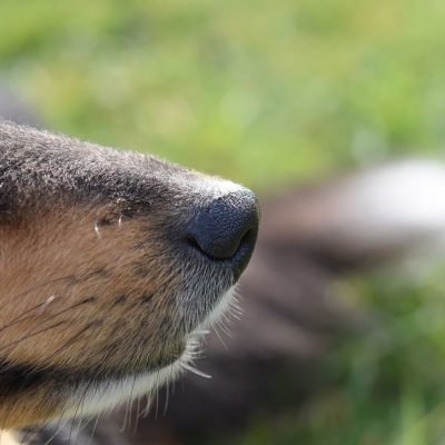 Truffle dogs have keen senses of smell