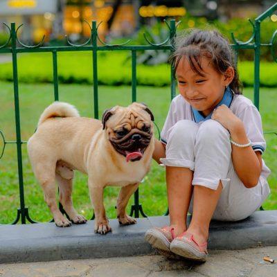 Pugs adore children