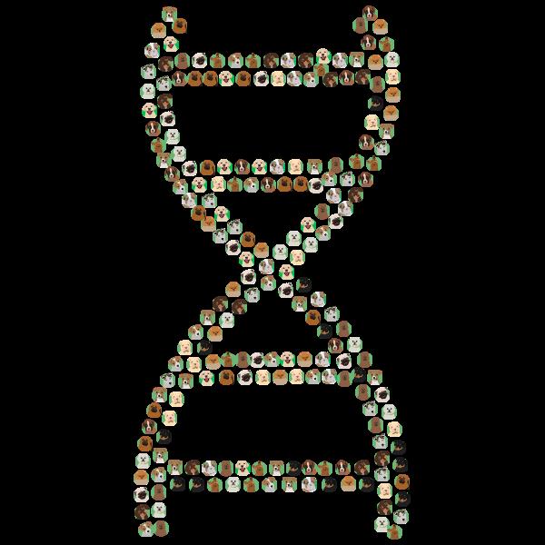 Dog DNA tests provide plenty of information