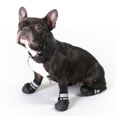 Measure your dog's feet carefully before any purchase