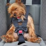 Dog car seats work for small and large dogs