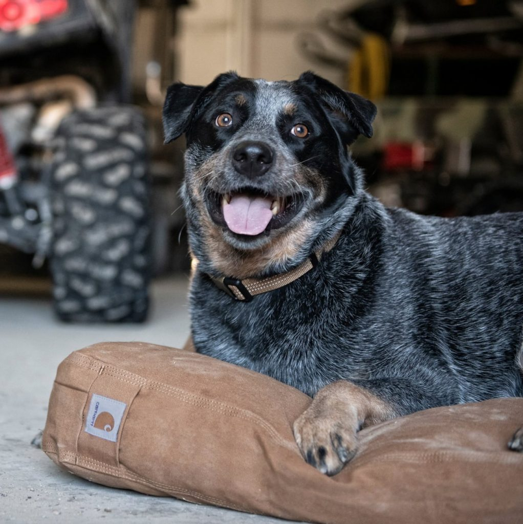 Carhartt Durable Canvas Dog Bed for Chewers