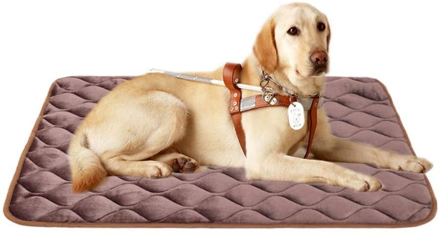 FurryBaby Washable Dog Bed