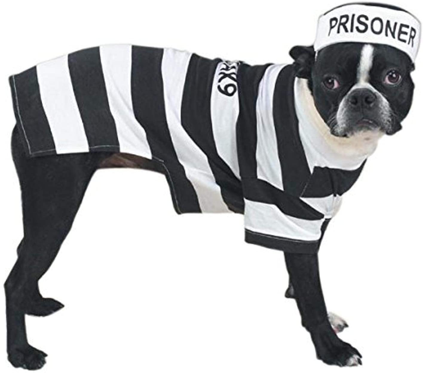 Prison Pooch