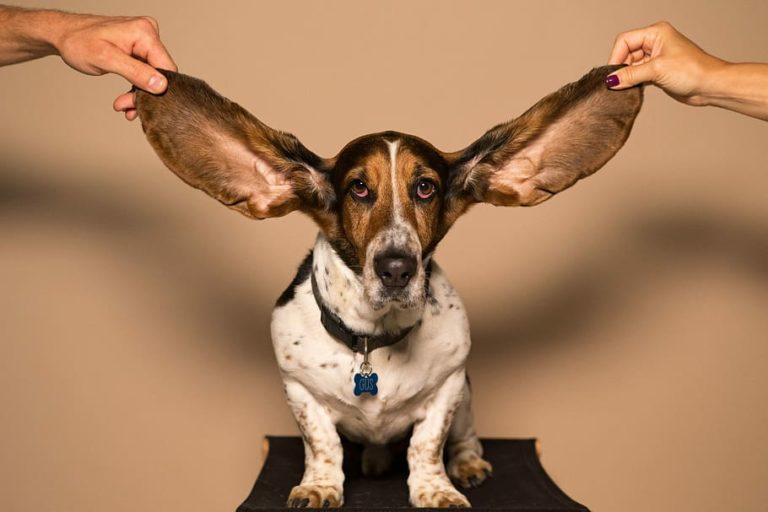 Dog ear cleaners help you keep those ears looking and smelling their best