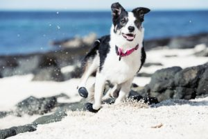 Dog hiking boots work for every outdoor adventure