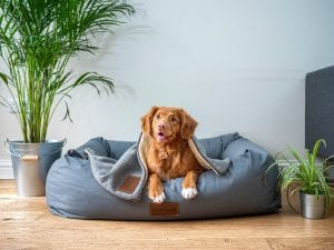 Dog beds for large dogs should cushion joints and bones