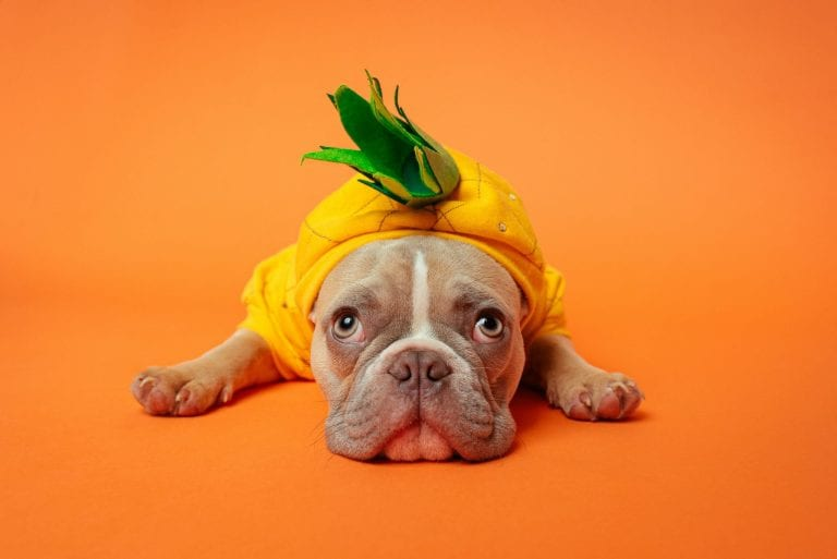 Dog Halloween costumes allow you to express your kiddos personality