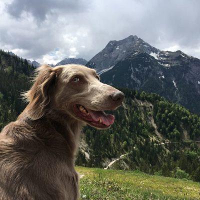 Dog mountain hiking