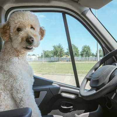 Dogs need proper safety restraints during travel