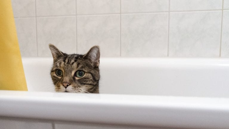Cat shampoos help when your feline needs some extra hygiene help