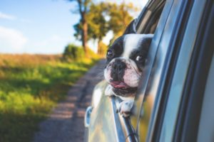 Dog car seat covers keep your car AND dog clean on trips