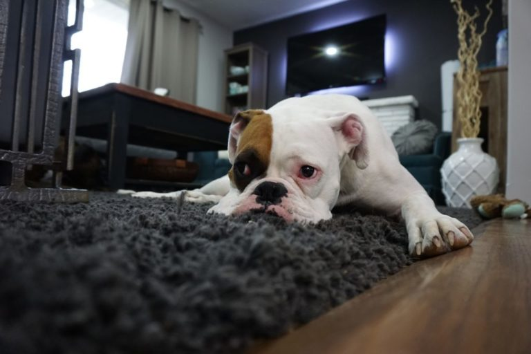 Pet carpet cleaners help you keep your house clean at all times