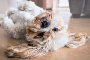 Pet vacuum cleaners help you control shedding fur