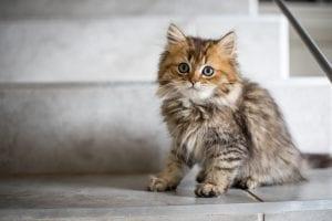 Automatic cat feeders ensure your feline gets regular meals