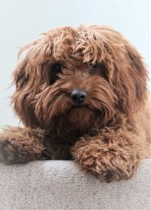 Dog wipes work for grooming between baths