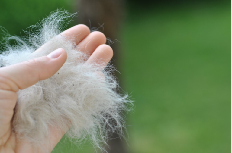 Pet hair lint rollers help you keep up with shedding hair
