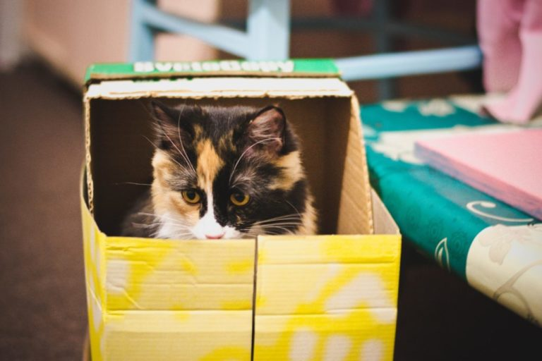 Outdoor cat houses work for anyone feline that goes outside