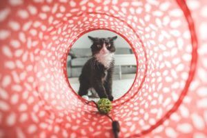 Electronic cat toys help your feline stay healthy