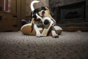 Dog dental care keeps their teeth healthy