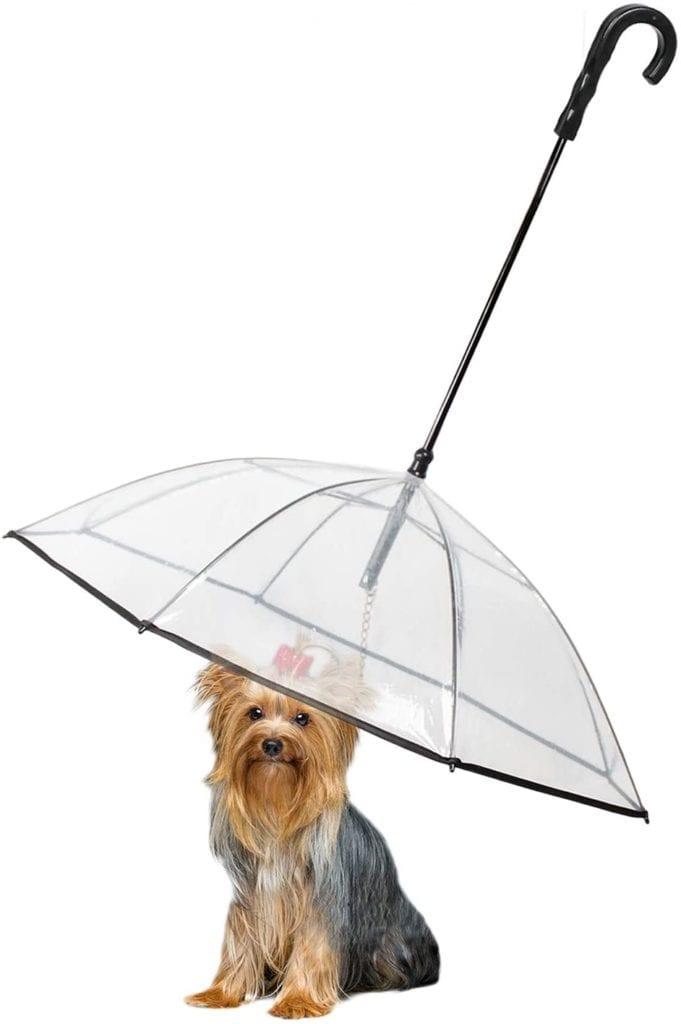Enjoying Pet Umbrella