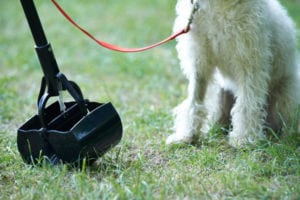 Pooper scoopers are a necessary part of owning a dog