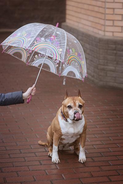 Umbrella dog leashes keep your faithful friend dry in the rain