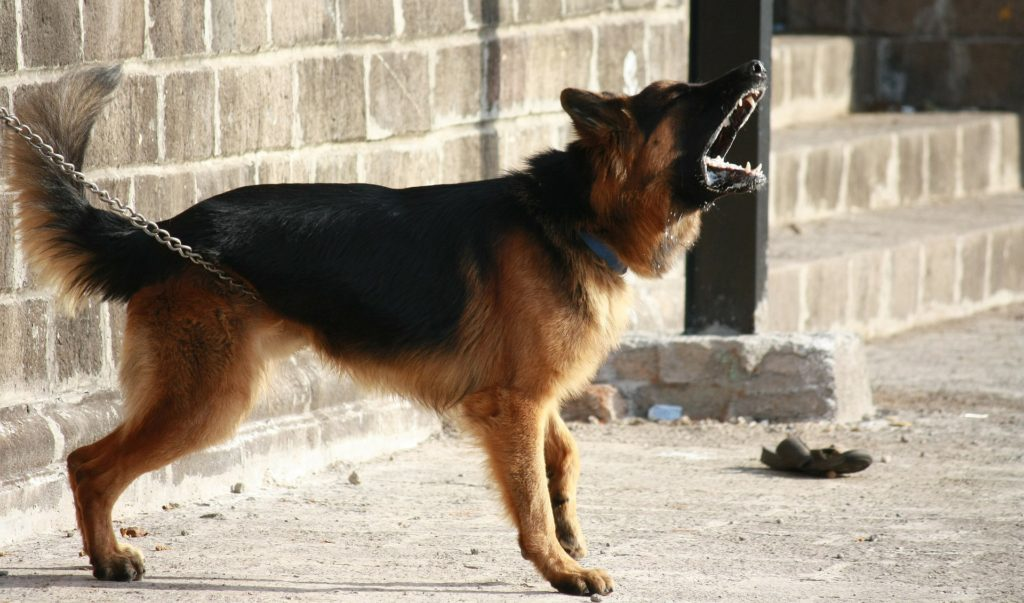 Stop a dog from barking involves understanding why your pup's barking