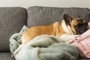 French Bulldogs are always a favorite - with any personality type