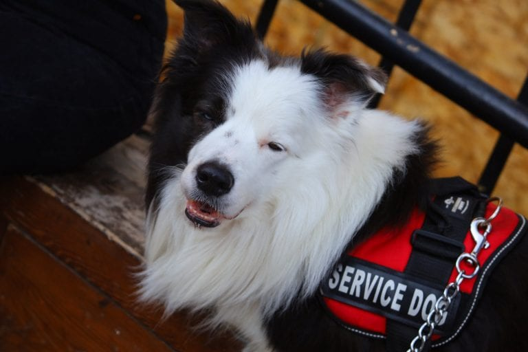 Service dog vests allow for immediate visibility