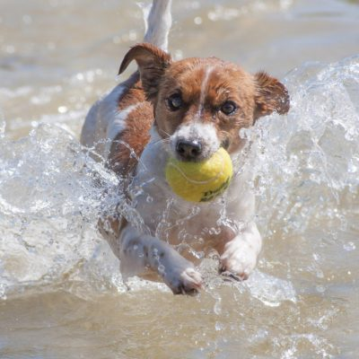 Playing fetch keeps your dog active - in mind and body
