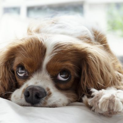 Anxious dogs benefit from special designs in their beds