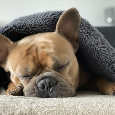 Dog blankets keep your pup comfortable