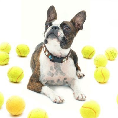 Tennis balls are a favorite toy with many dogs