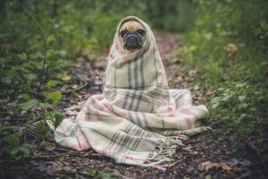 Dog blankets work for plenty of different situations