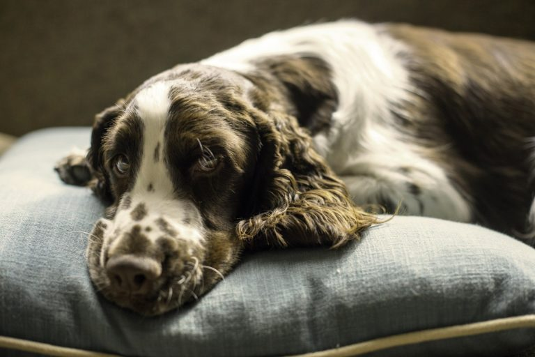 Calming dog beds work to soothe anxiety