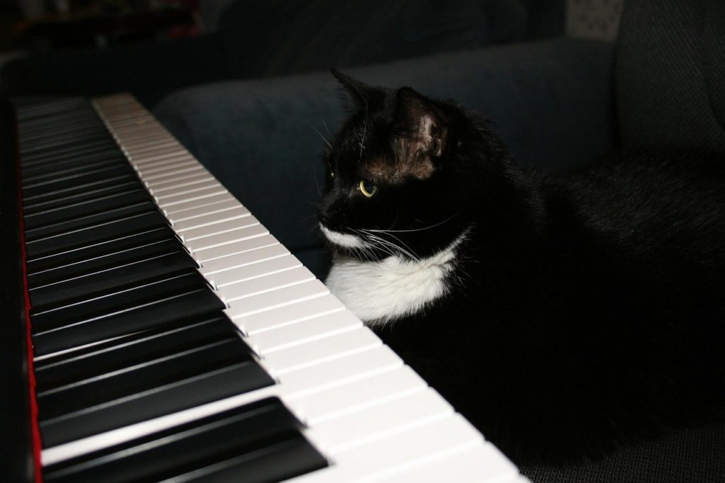 A feline playing the piano? It's not impossible!