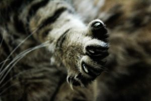 Trimming cat nails keeps you and your cat safe
